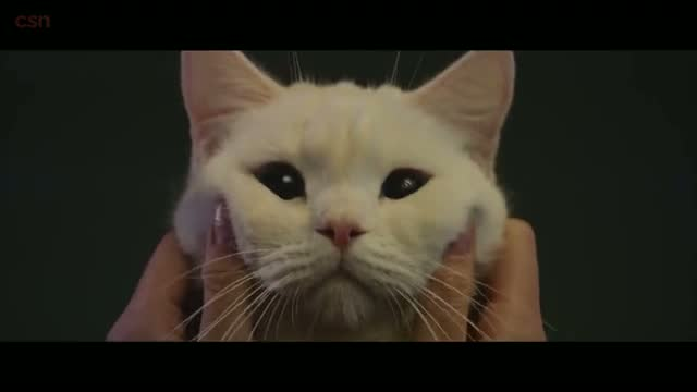 Meow The Secret Boy